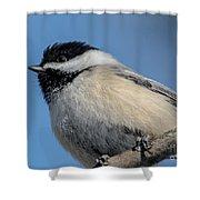 Chickadee Shower Curtain