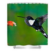 Collared Inca Hummngbird Shower Curtain
