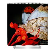 Colorful Portrait Of A Butterfly  Shower Curtain