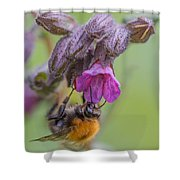 Common Carder Bee Shower Curtain