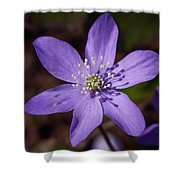 Common Hepatica Shower Curtain