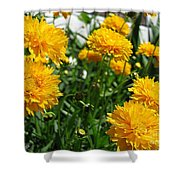 Coreopsis Named Early Sunrise Shower Curtain