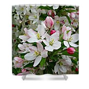 Crabapple Blossoms Shower Curtain
