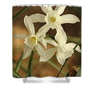 3 Daffodils Shower Curtain