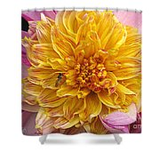 Dahlia Named Lambada Shower Curtain