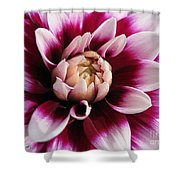 Dahlia Named Mystery Day Shower Curtain