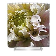 Dahlia Named Strawberry Ice Shower Curtain