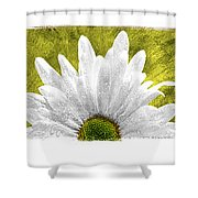 3 Daisies  Shower Curtain