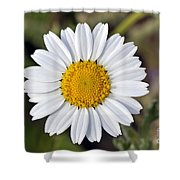 Daisy Flower Shower Curtain by George Atsametakis
