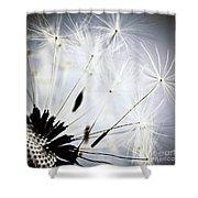Dandelion Shower Curtain by Elena Elisseeva