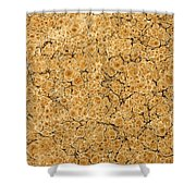 Decorative End Paper Shower Curtain