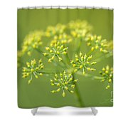 Yellow Dill Flower Shower Curtain