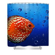 Discus Fish Shower Curtain
