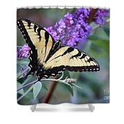 Eastern Tiger Swallowtail Butterfly On Butterfly Bush Shower Curtain