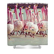 Flamingos On Lake In Andes Shower Curtain