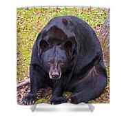 Florida Black Bear Shower Curtain