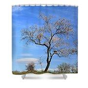 Flowering Almond Shower Curtain
