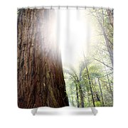 Forest Light Shower Curtain