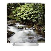 Forest Stream  Shower Curtain