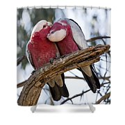 Galahs Shower Curtain