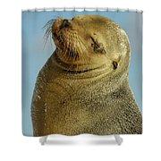 Galapagos Sea Lion Zalophus Wollebaeki Shower Curtain