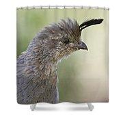 Gambel's Quail  Shower Curtain