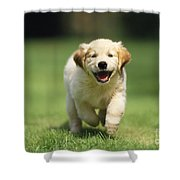 Golden Retriever Puppy Shower Curtain
