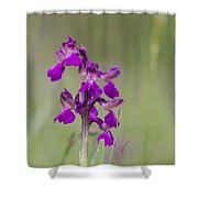 Green-winged Orchid Shower Curtain