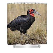 Ground Hornbill Shower Curtain