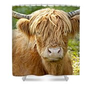 Highland Cow Shower Curtain by Brian Jannsen