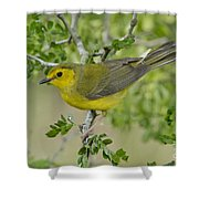 Hooded Warbler Shower Curtain