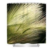 Hordeum Jubatum Grass Shower Curtain