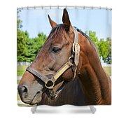 Horse On A Farm  Shower Curtain
