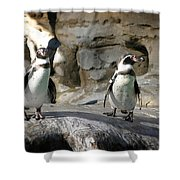 Humboldt Penguin Shower Curtain
