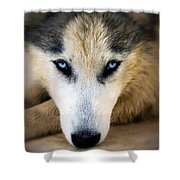 Husky  Shower Curtain by Stelios Kleanthous