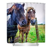 Icelandic Ponies Shower Curtain