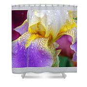 Iris 4 Shower Curtain