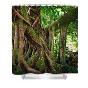 Kipahulu Banyan Tree Shower Curtain