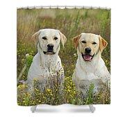 Labrador Retriever Dogs Shower Curtain