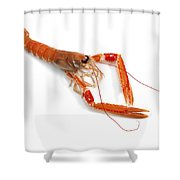 Langoustine Shower Curtain