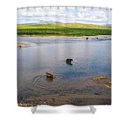 3-lay Of Land Grizzly Bears In Moraine River In Katmai National Preserve-ak Shower Curtain