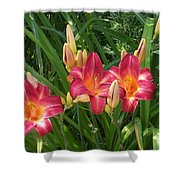 Three Lilies In A Row Shower Curtain