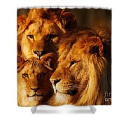 Lion Family Close Together Shower Curtain