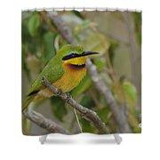 Little Bee-eater Shower Curtain