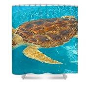 Loggerhead Sea Turtle Shower Curtain