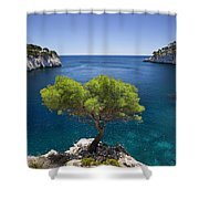 Lone Pine Tree Shower Curtain