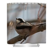 Long-tailed Tit Perched On Twig Shower Curtain