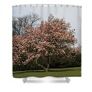 Magnolia Tree Shower Curtain