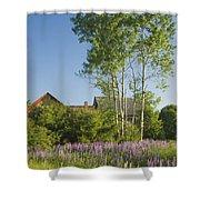 Maine Wild Lupine Flowers Shower Curtain