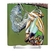 Malachite Butterfly Metamorphosis Shower Curtain